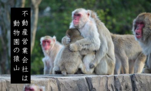 不動産営業会社は動物園の猿山